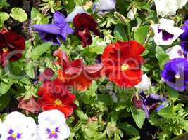 Agriculture planting plants and garden flowers