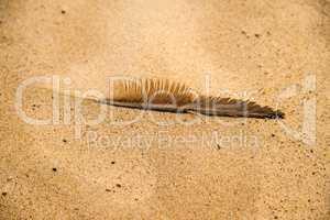 feather on a beach