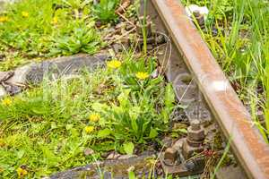 rails out of order overgrown with green grass