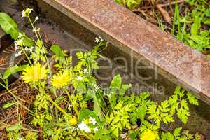 rails out of order with flowers