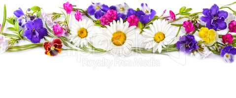 Chamomile and Violet isolated on white background. Flat lay, top
