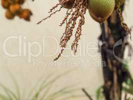 Wet palm stem with drop of water hanging.