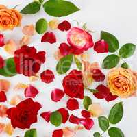 Red roses on a white wooden background. Flat lay, top view.