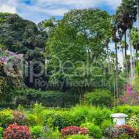 Tropical park with beautiful trees and flowers.
