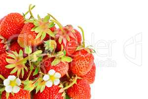 Strawberries isolated on white background. Free space for text.