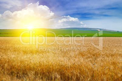 Wheat field and a delightful sunrise.