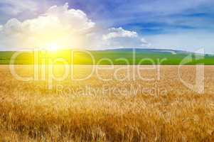 Wheat field and a delightful sunrise.