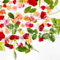 Red roses isolated on white background. Flat lay, top view.