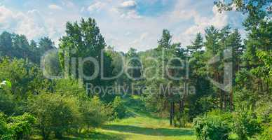 Natural forest with coniferous and deciduous trees, meadow and f