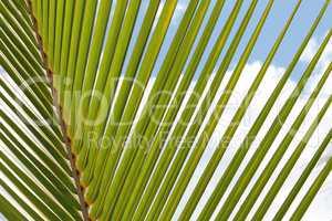 Zweig einer Palme