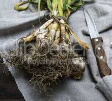 fresh young garlic tied in a bundle on a gray linen napkin