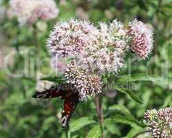 Motte und Blume