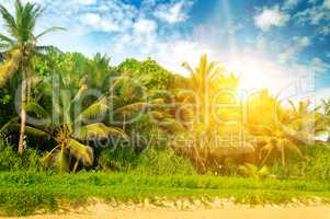 Tropical palms on the sandy beach and bright sunrise.