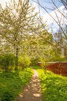 romantic track in spring within blooming trees