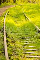 rails out of order, overgrown with green grass
