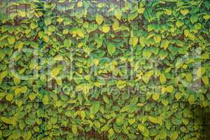 net of green leaves on a fence