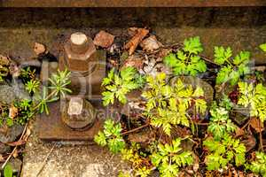rails out of order with Roberts Geranium