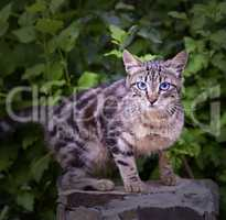 street tabby cat on a background of green bushes