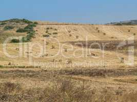 Moroccan Landscape With Many Hay Bales