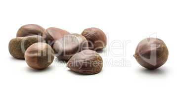 Raw edible Chestnut isolated on white