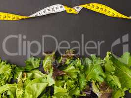 Fresh lettuce on a chalkboard