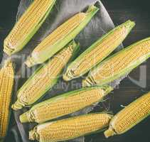 lot of fresh ripe corn cobs,  top view