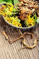 Root and flowers of inula