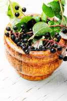 Branch with berries of bird cherry