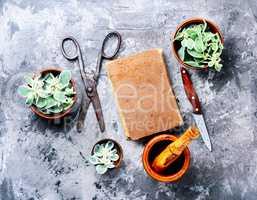 Euphorbia - an ancient means of folk medicine