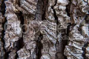 Wallpaper of tree bark.