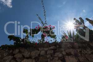 Shinny sun over plants, flowers and an ancient stone wall.