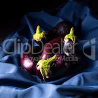 Eggplant (Solanum melongena) is a species in the nightshade fami