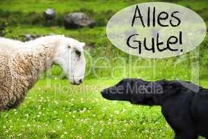 Dog Meets Sheep, Alles Gute Means Best Wishes