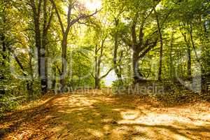 Forest in autumn with way in light and shadow
