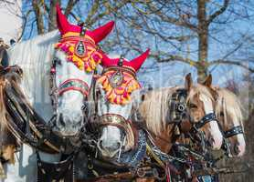 horses in front of coaches