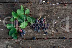 Fresh and ripe shadberry with branch on weathered wooden table