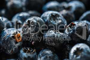 Blueberries closeup with water drops