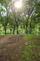 view in the city park of Kherson Ukraine on green trees