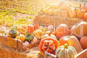 a pleasure for the eyes a pumpkin stall in the village