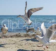 flock of white gulls flies on the Black Sea shore on a summer d
