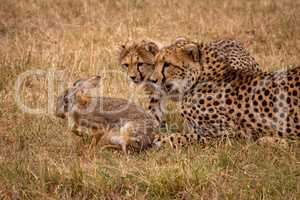 Cheetah cub and mother watch scrub hare