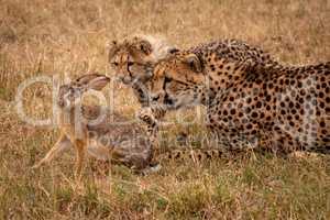 Cheetah cub claws scrub hare beside mother