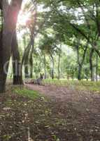 view in the city park of Kherson Ukraine
