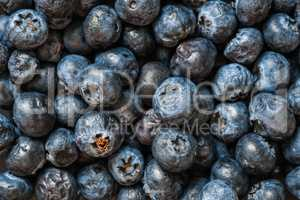 Ripe Blueberries Close Up background