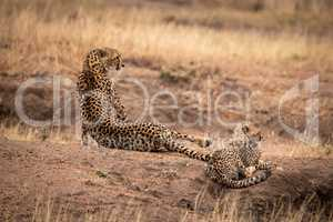 Cheetah lies beside cub on dirt mound