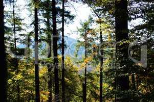 Bäume im Pfälzerwald