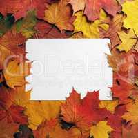 Paper, autumn leaves