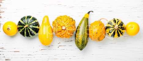 Assortment of decorative pumpkins