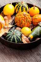 Autumn pumpkin in tray