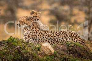 Cheetah lies on mound with sleepy cub
